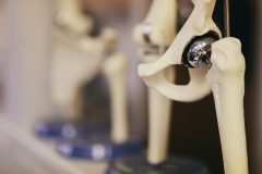 Avala Physical Therapy - Anatomical Models
