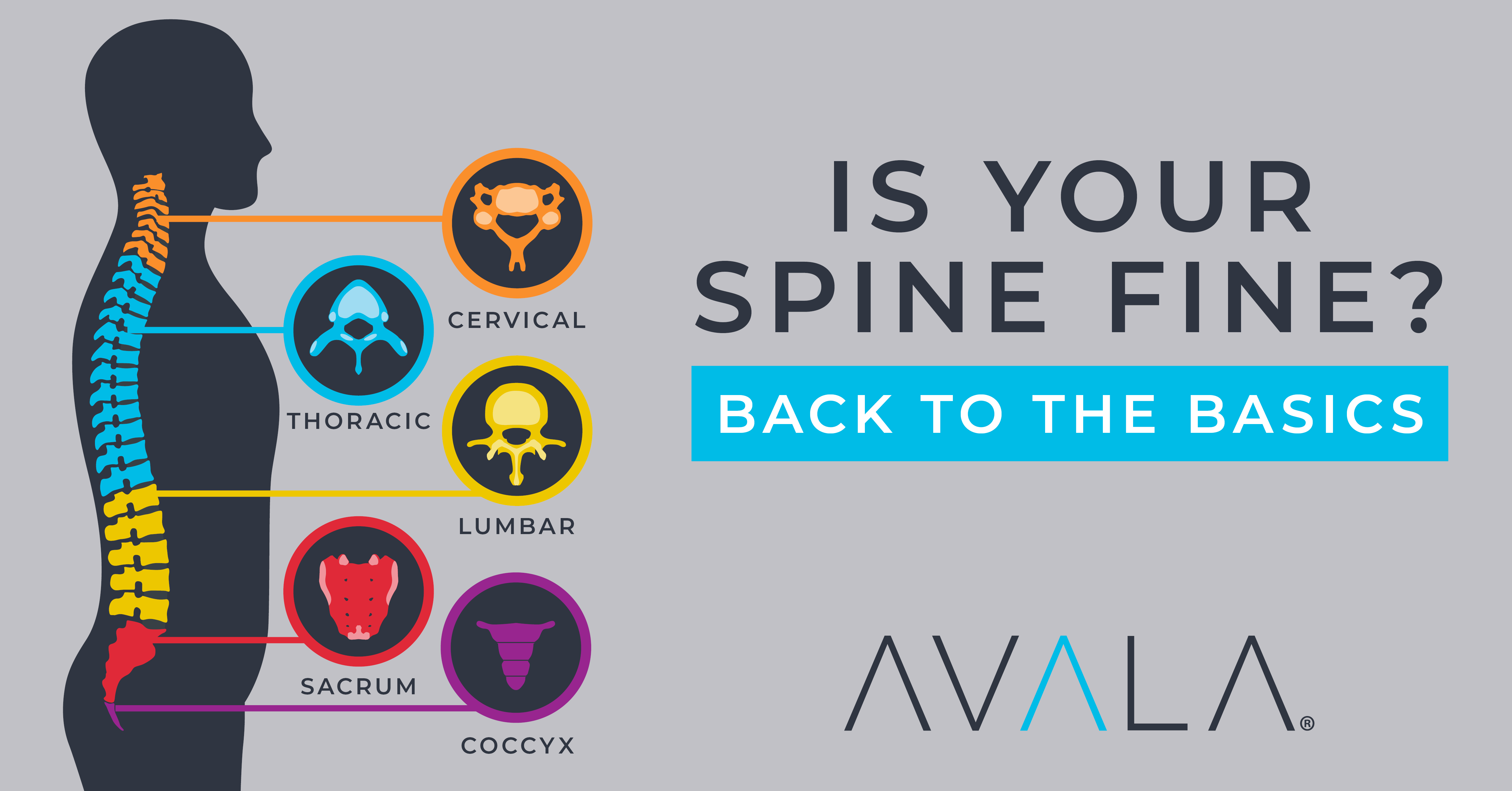 Spine Education